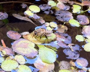 20110206_honybee