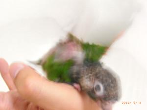 2012_05_04_hanada_day39